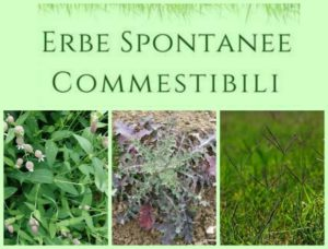 erbe-spontanee-lineabio360