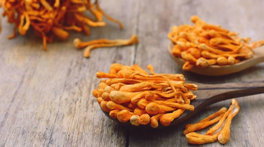 fungo cordyceps contro allergia